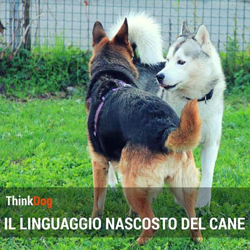 Il linguaggio nascosto del cane